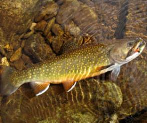 turning-stones-fly-fishing-western-north-carolina-trout-streams-guide-turning-stones-fly-fishing