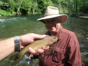 turning-stones-fly-fishing-wild-nc-rainbow-trout