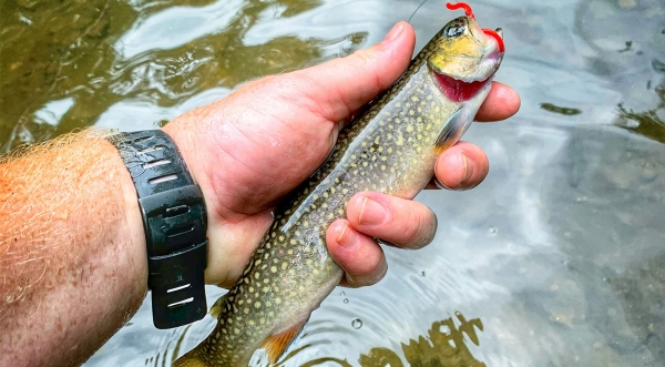 Trout Fishing is the Ultimate Social Distancing Activity